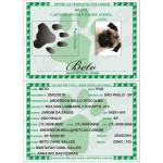 RG_animal_caes_cao_gato_cachorros_calopsitas_passaros_ratos_identidade_identificacao_placas_identidade+plaquetas_micro_chip_microchip_documento_RGA_08