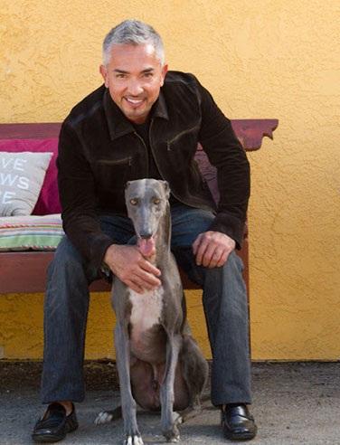 Saving-the-Satos-Stray-Dogs