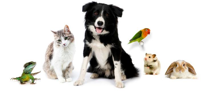 Pet sitters39 levam cuidado para animais ate casa do cliente for Babysitter dog sitter