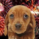 fogos de artificio assustam animais canil salles