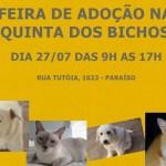 Doação de cães domingo em São Paulo SP Canil Salles